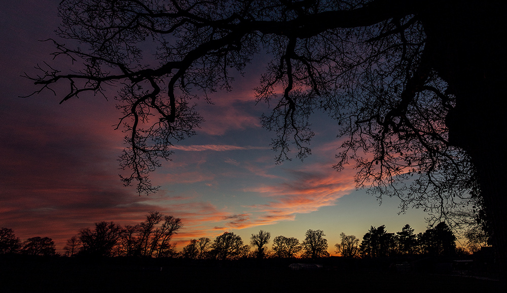 Commercial Photography Sunset in Cheshire with Trees © Paul Worpole Photography