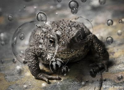 Conceptual Photography Frog Blowing Bubbles © Paul Worpole Photography
