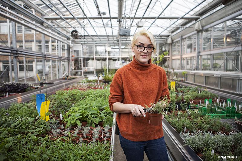 Technicians Make It Happen Sainsburys Laboratory Cambridge University Portrait of Woman In Rust Coloured Jumper Glasses Greenhouse Holding a Plant and Secateurs © Paul Worpole Photography
