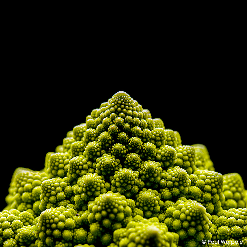 Close Up Product Photography of Romania Cabbage on Black Background© Paul Worpole Photography