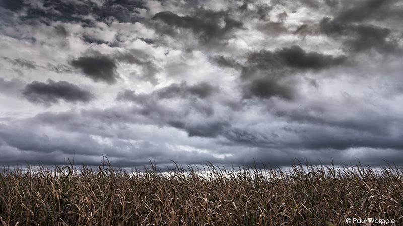 Editorial Photography of Stormy Sky over Maize Field © Paul Worpole Photography